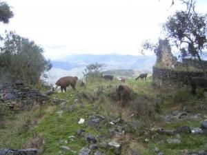 Ruinen und Tiere in Kuelap. Foto: D. Raiser / INFOAMAZONAS