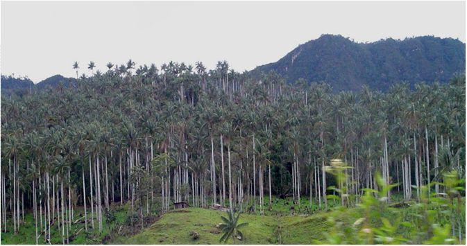 Bosque de Palmeras. Foto: SERNANP.